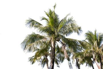 group of coconut,coconut make dessert or food