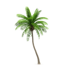 Coconut tree, isolated on white background. 3d image