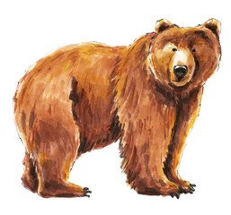 Cute brown wild bear. Watercolor sketch drawing. Watercolor animals