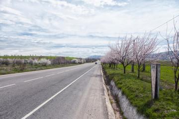 Dream road