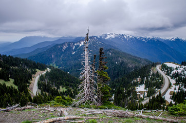 Dead tree with Hurricane Ridge road in background