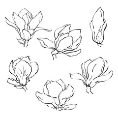 Set of hand drawn vector magnolia flowers in sketch line style