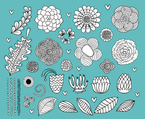 Flower hand drawn black and white vector set, succulent, rose, leaf, floral elements collection for card design