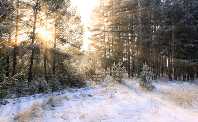 the sun's rays through the branches of trees covered with hoarfrost