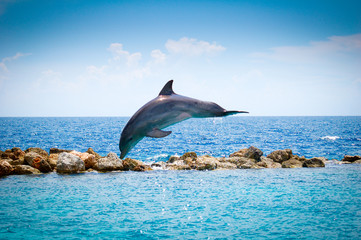 Jumping Dolphins in the sea