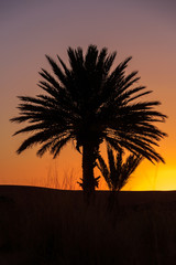 beautiful orange sunset between palm trees in morocco