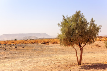 Beautiful Moroccan Mountain landscape with acacia tree in foreground