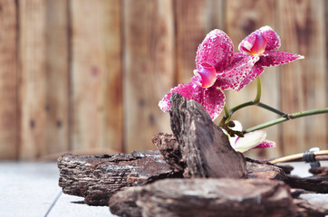 Beautiful flowering orchid covered with dew on a white wood and wood shavings background