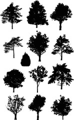 thirteen isolated on white trees silhouettes