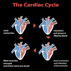 The cardiac cycle of heart on black isolated.