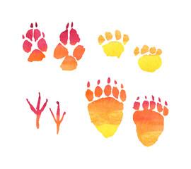 Animal footprints, Paw prints, Watercolor illustration