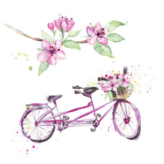 Tandem bicycle with spring pink blossom, hand drawn. Watercolor illustration