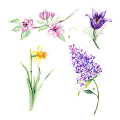 Spring floral set. Collection with spring flowers, drawing watercolor, anemone, narcissus, daffodil, lilac