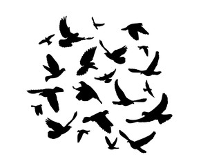 Vector, silhouette of flying birds