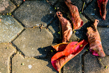 Dry leaf Red on cement