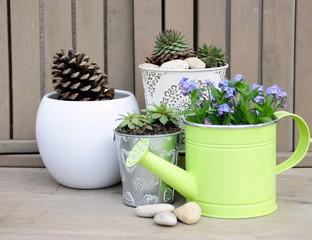 pots de plantes succulentes et myosotis printanier , arrosoir déco et galets