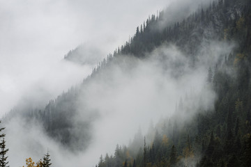 View of forest trees covered with clouds