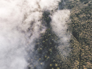 Aerial view of woodland, above cloud level