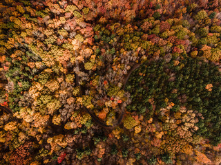 Dense forest in autumn, with road running through it, overhead view Fotoväggar