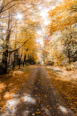 Autumn leaves on road passing through forest