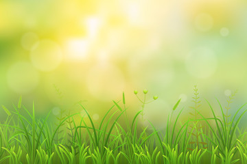 Spring green grass herbal natural background
