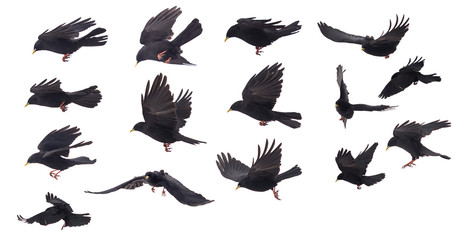 set of One bird compilation on white background