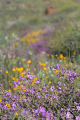 Hillside in Bloom with Wildflowers