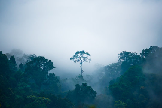 Tree growing in jungle on foggy day