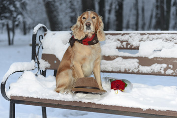 Spaniel in winter with flowers