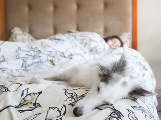 Girl and dog lying in bed