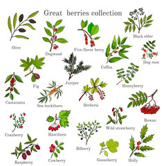 Vintage collection of hand drawn berries plants