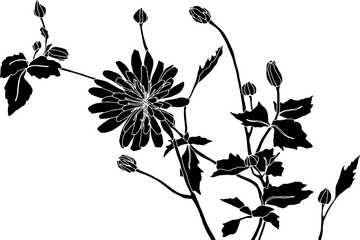 Line Drawing Flower Images : Passionflower passion flower vector clip art search