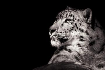 Snow Leopard XI B&W