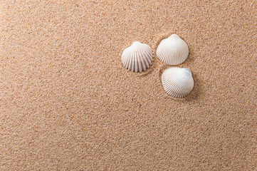 Three seashells on yellow beach sand