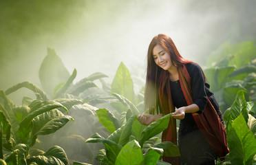 Agricultural tobacco farm