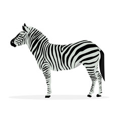 Two color illustration of zebra profile isolated on white background.