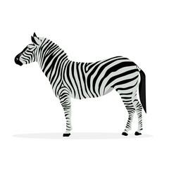 Two color illustration of zebra profile isolated on white background.