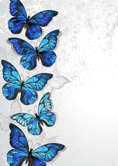 Design with blue butterflies morpho