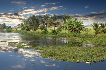 panoramic view with Coconut trees, backwaters landscape of Alleppey, Kerala, India