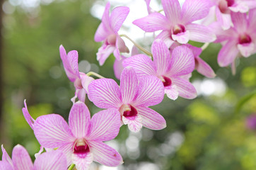Bouquet of pink flowers orchids