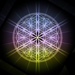 Sacred geometry Flower Life on black Background