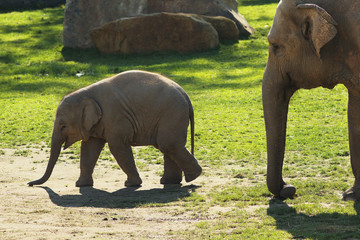 Elephants in ZOO