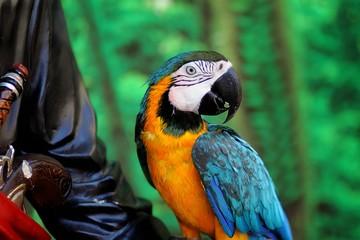 parrot, bright