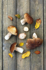 fresh harvest from the forest/ Edible mushrooms are laid out on wooden surface top view