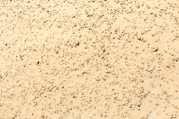 Closeup of sand texture with shells and small stones