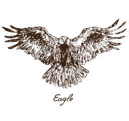 Eagle flying, with inscription, hand drawn doodle, sketch in pop art style, vector illustration