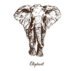 Elephant standing, with inscription, hand drawn doodle, sketch in pop art style, vector illustration