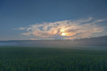 Wheat fields on a sundown