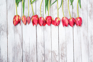 Beautiful red tulips on wooden background. Space for text.