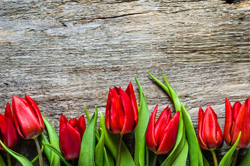 Red tulips, background for mothers day
